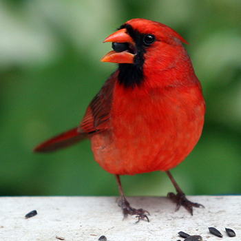 Flipping the bird law
