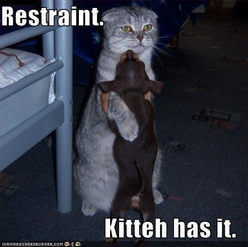 Cat restraining order
